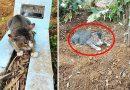 Xót xa cảnh chú mèo ngày ngày nằm đợi bên mộ chủ suốt 1 năm trời dòng dã