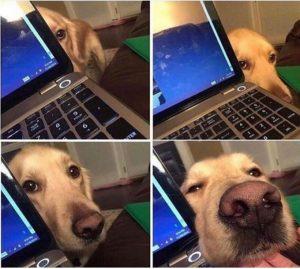 Nghe nói chỉ những người nuôi chó mới hiểu. Thế này là nó đang muốn nói gì đây hả các bác?