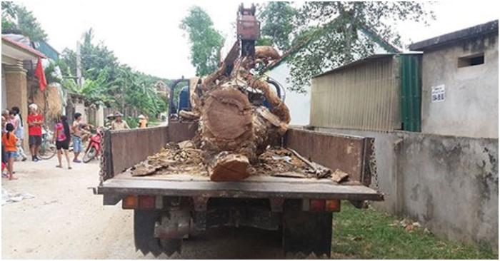 Thuê xe cẩu trộm cây mít trị giá 40 triệu đồng tại Xã Kim Liên