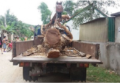 Liều lĩnh thuê xe cẩu trộm cây mít trị giá 40 triệu đồng