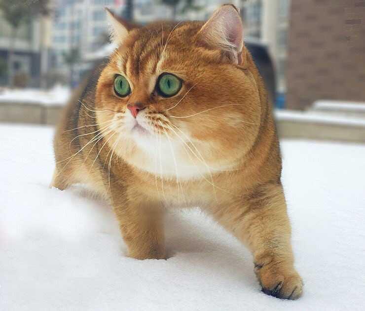 Hình ảnh đáng yêu của chú mèo đội lốt chó