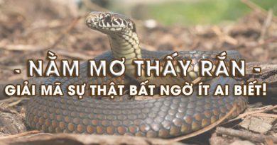 Mơ thấy rắn hổ mang