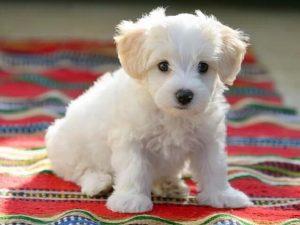 Nằm mơ thấy chó trắng là điềm gì? Đánh lô đề con nào?