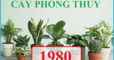 Tuổi Canh Thân hợp cây gì trồng trong nhà?